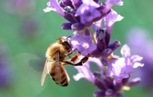 Be like a Bee, a Honey Bee