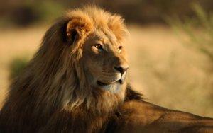 Be like a Lion (Swayameva Mrigandratha)